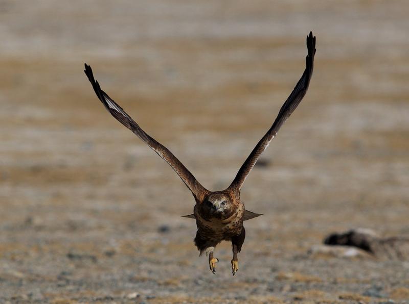 西藏 野生动物