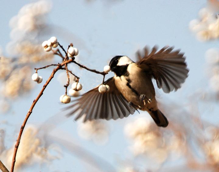 空中最厉害的动物