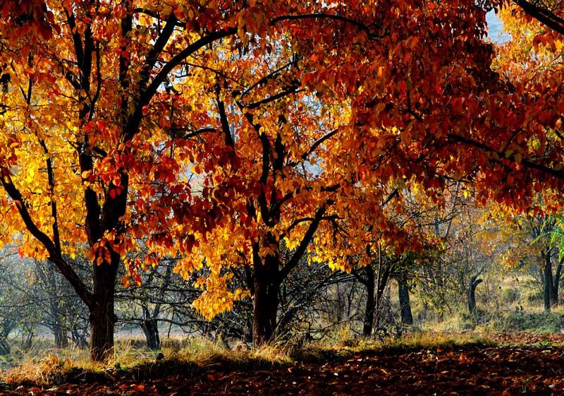 简笔画秋天的果园图片