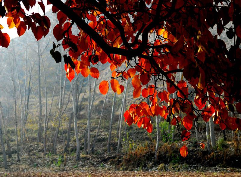 秋天的果园图片