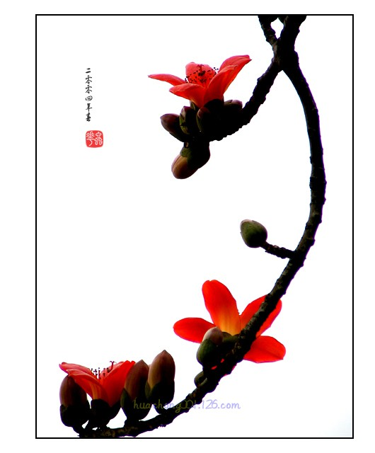 ctps.cn-- 木棉花(一)