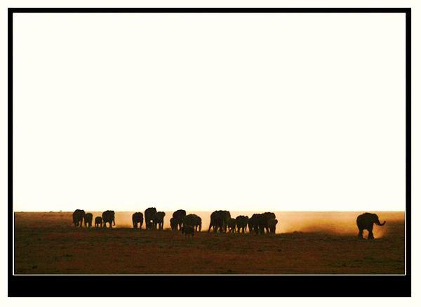 ppt图片背景风景非洲_图片素材