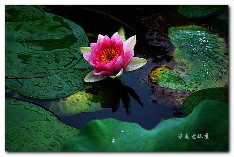 奥比岛妖精水莲
