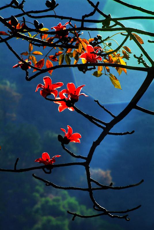 攀枝花 高清图片
