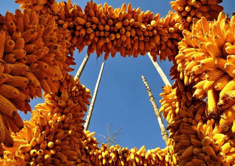 玉米粒做的动物图片