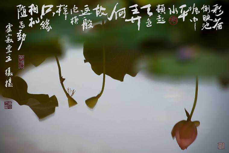 荷花水彩,日本水彩手绘插画