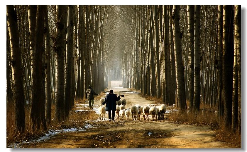 森林 小动物的家园