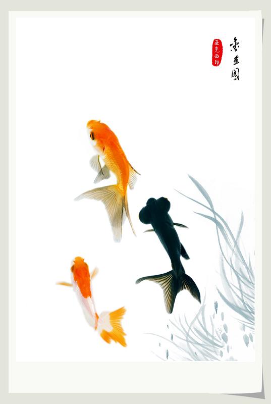国画写意动物金鱼