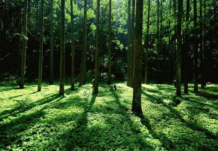 ctps.cn-- 森林阳光 南国红豆