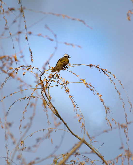 ctps.cn-- 树上的鸟儿 想走就走