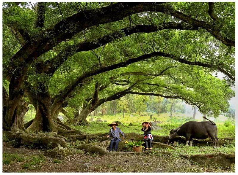 ctps.cn-- 榕树下 森林之王