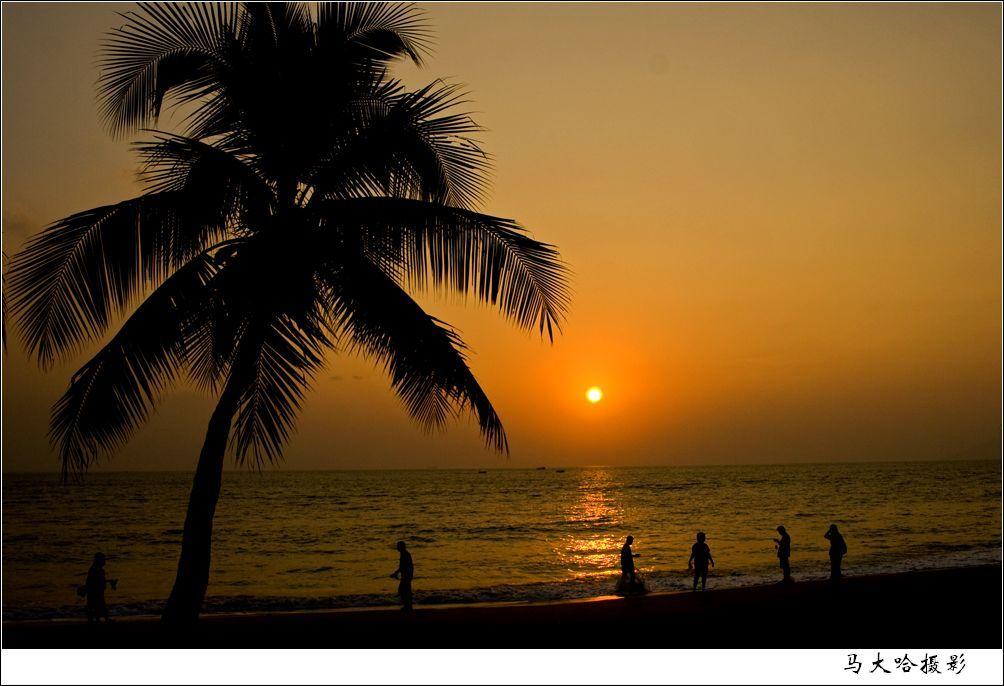 背景 壁纸 风景 树 天空 桌面 棕榈树 1004_686