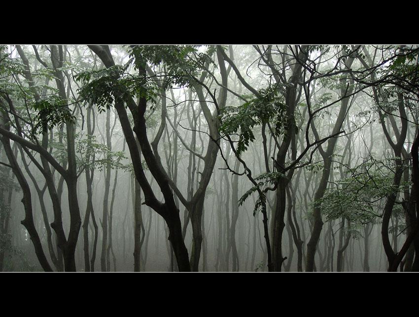 ctps.cn-- 小树林 红的茶