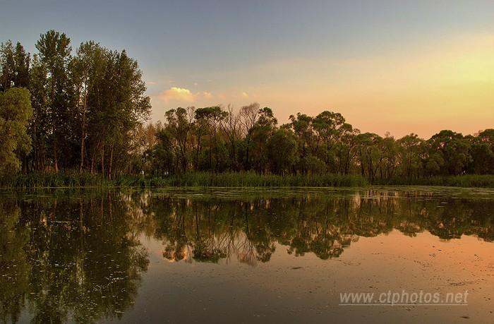 夕照河边小树林
