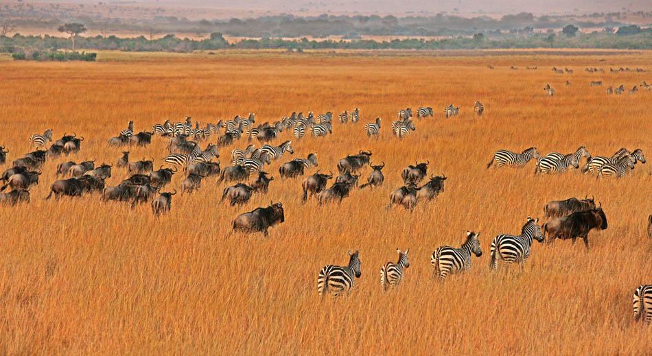 野生动物大迁徙