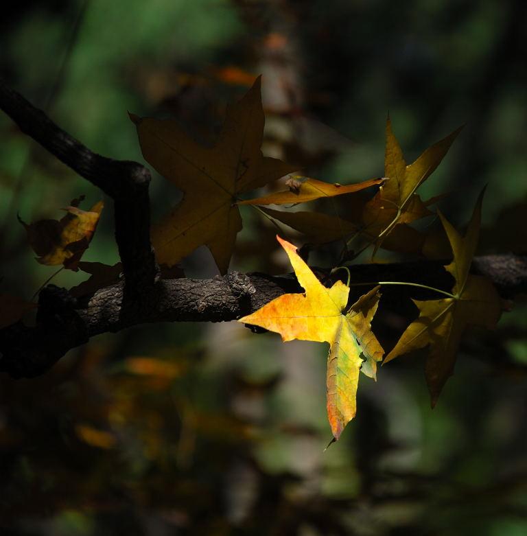 秋叶拼图动物图片