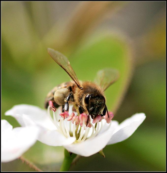 春天忙碌的小蜜蜂
