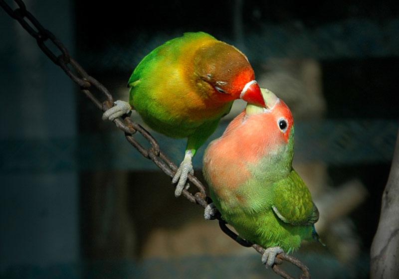 动物 鸟 鹦鹉 800