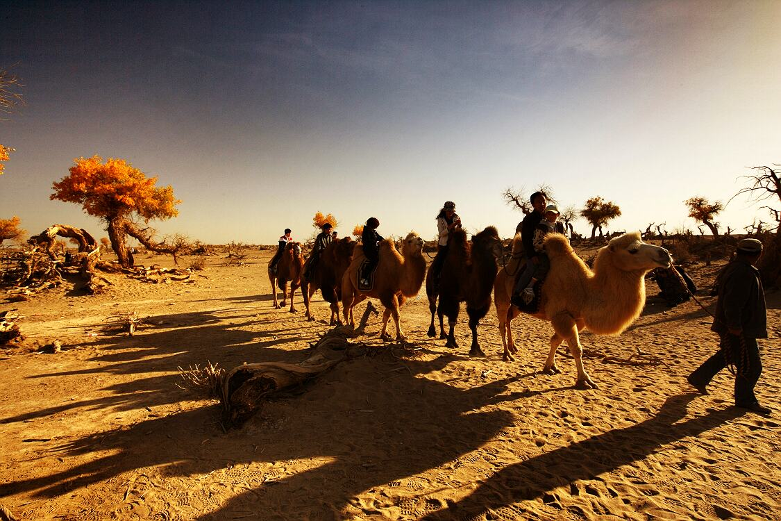 十一结伴行摄祖国西北大漠胡杨额济纳图片