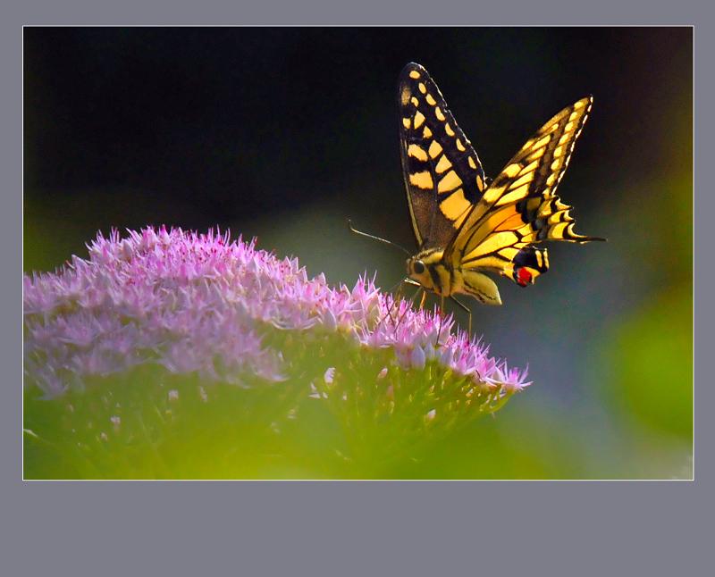 彩蝶对戒效果图