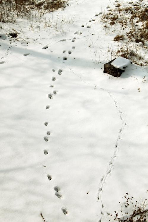 雪地里的小动物们