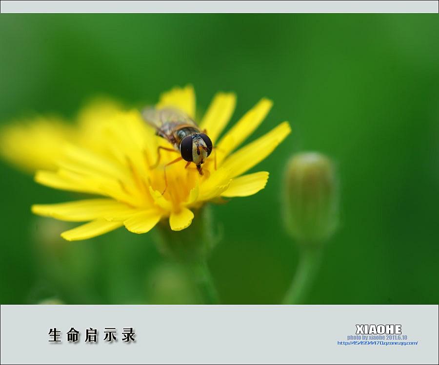 生命的启示动植物的例子-动植物热爱生命的事例