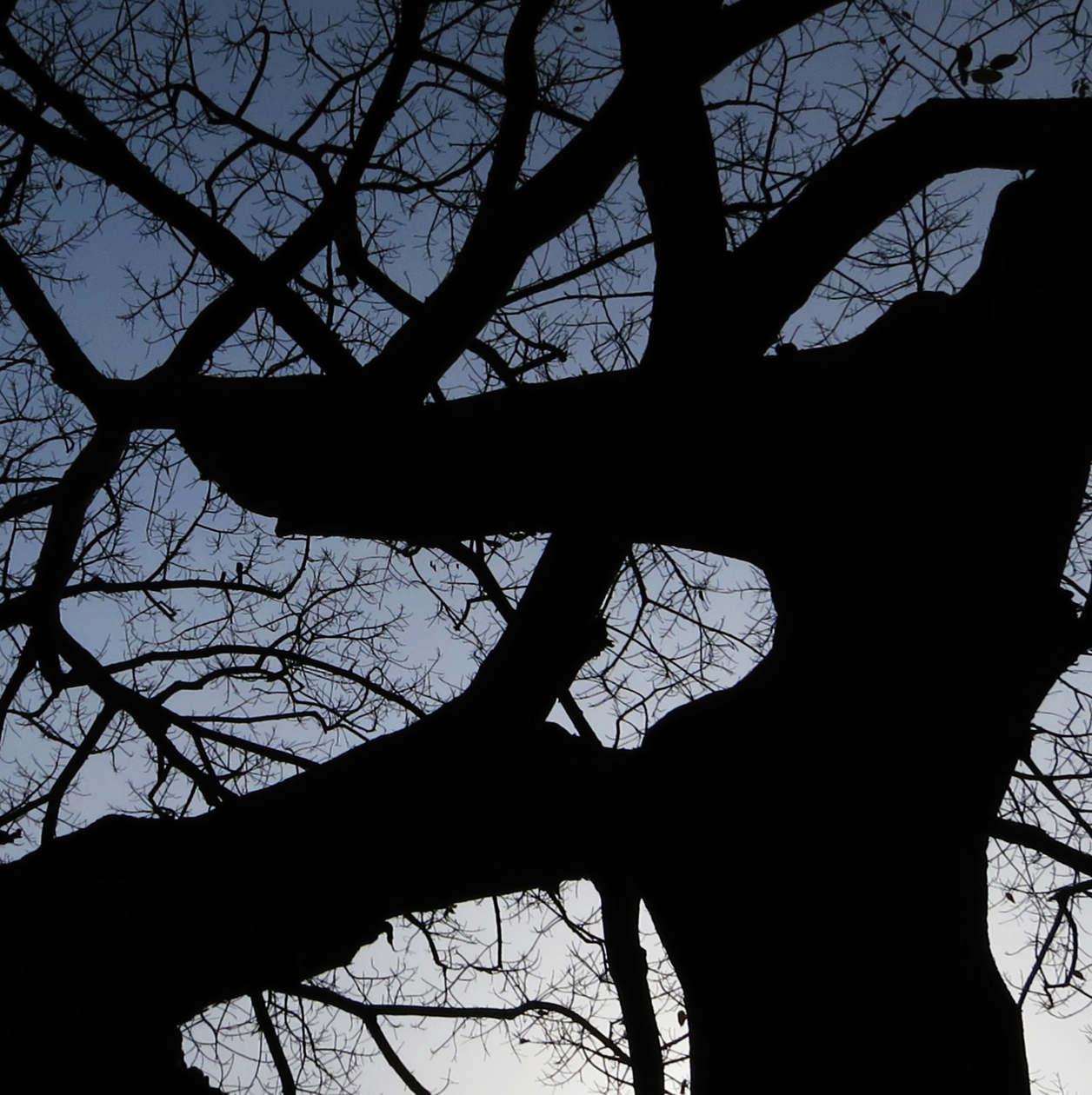 黑色影子树壁纸手绘