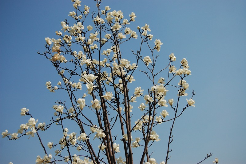 春天的花朵简笔画 高清图片