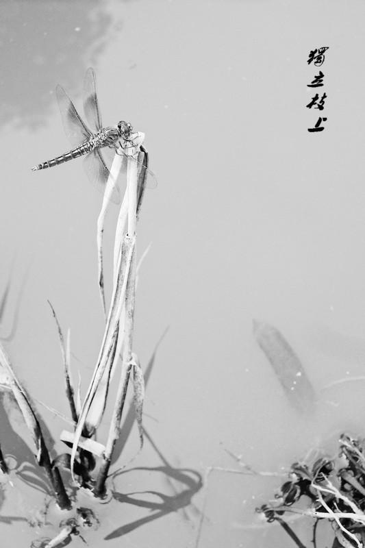 手绘蜻蜓铅笔画