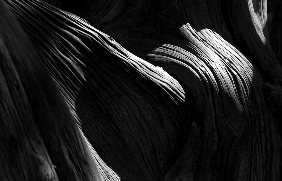 ctps.cn-- 肌理 橄榄树枝 树 黑白