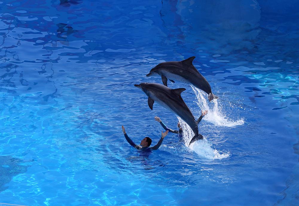 跳跃的海豚图片大全