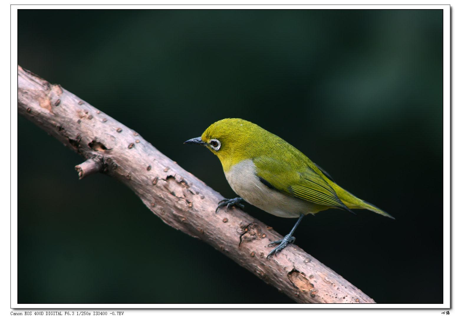 壁纸 动物 鸟 鸟类 雀 1564_1080