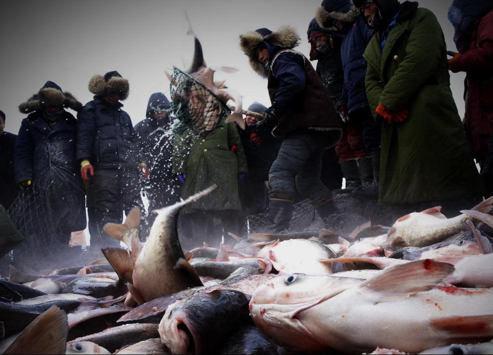吉林查干湖冬捕,39斤重头鱼拍出78万元天价 - 柏村休闲居 - 柏村休闲居