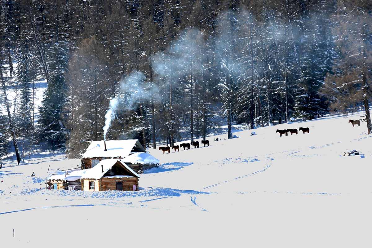 冬天的景色