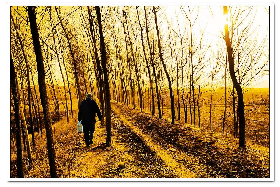 时间:2013年2月9日(农历大年二十九的上午9.30分) 地点:老家通往后山的林间小道上 人物:父亲 事件:给祖先们烧纸钱,请祖先们回家过年 关键词:背影