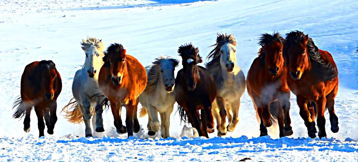 壁纸 动物 马 骑马 1199_544