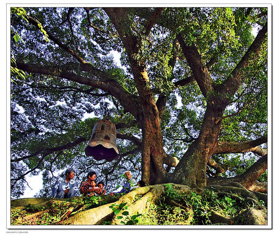 车坛影协 --www.ctps.cn-- 村头那颗树3 可园