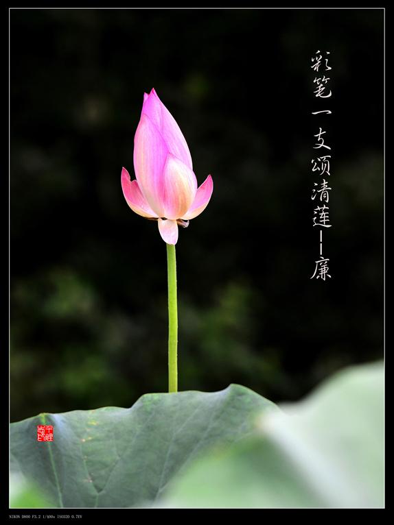彩笔植物手绘素材