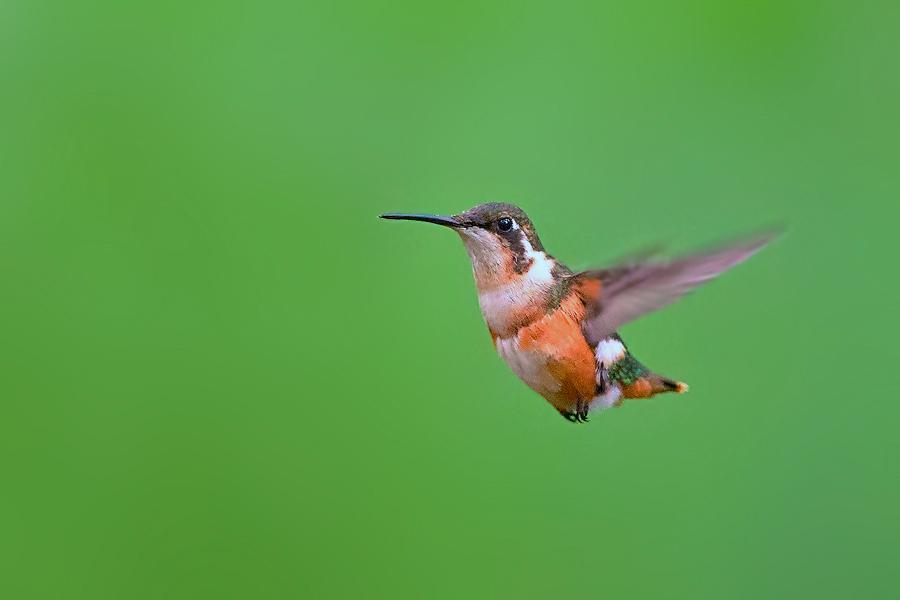 蜂鸟配送图片素材