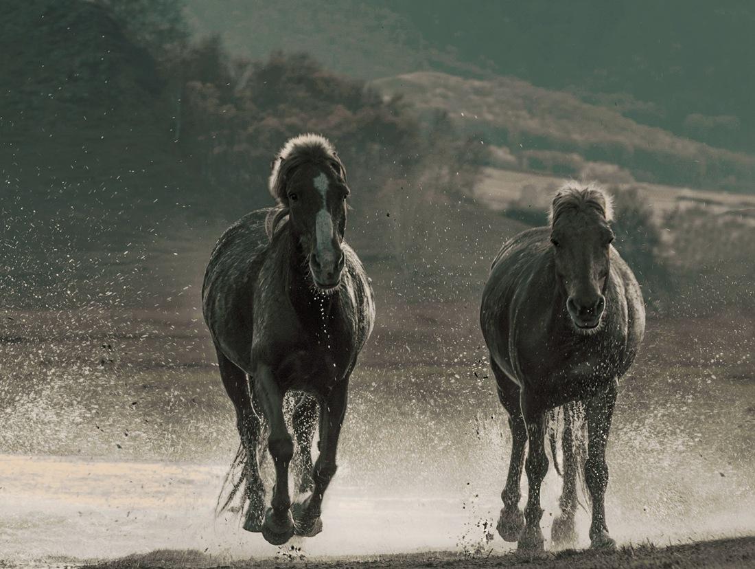 壁纸 大象 动物 马 骑马 1100_828