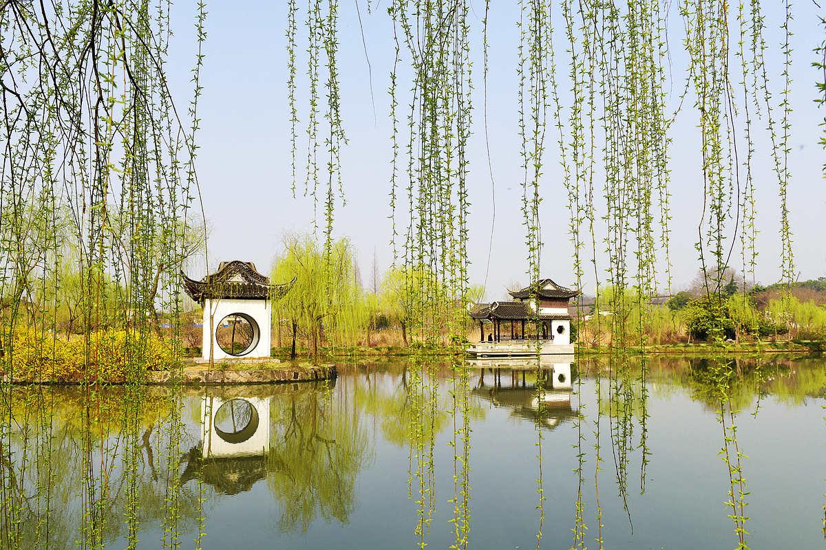 壁纸 垂柳 风景 柳树 摄影 树 桌面 1200_800