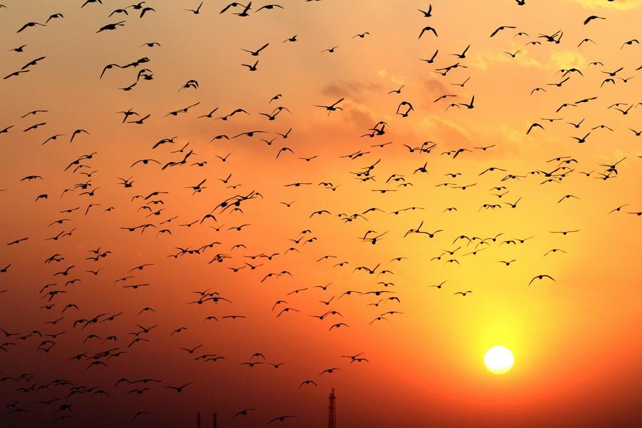 天空的飞鸟卡通图片