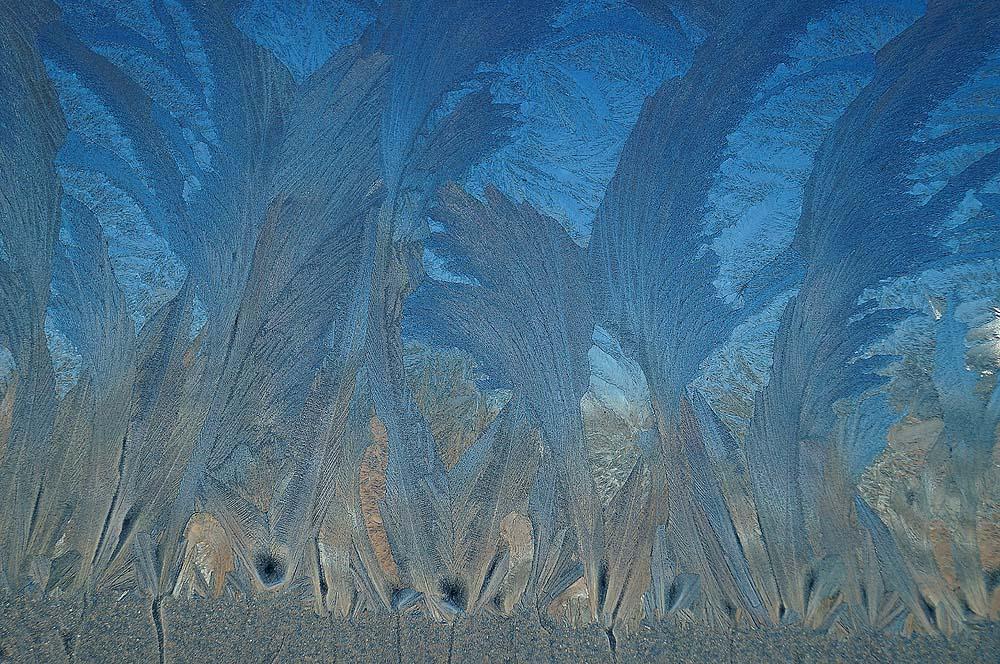 凤尾竹-窗上冰花1