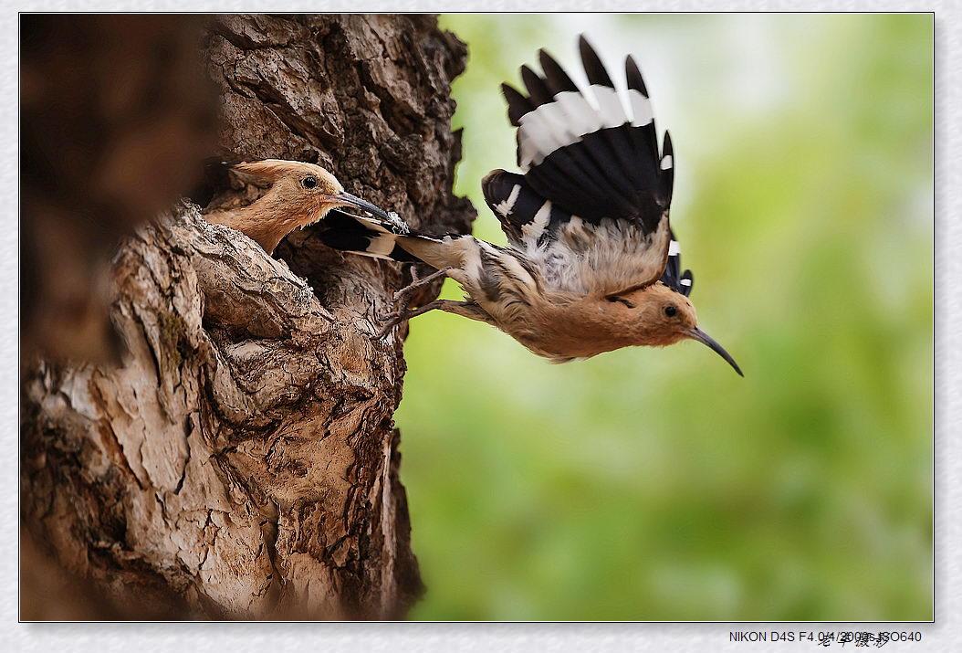 [转载]珍奇鸟类摄影获奖作品欣赏