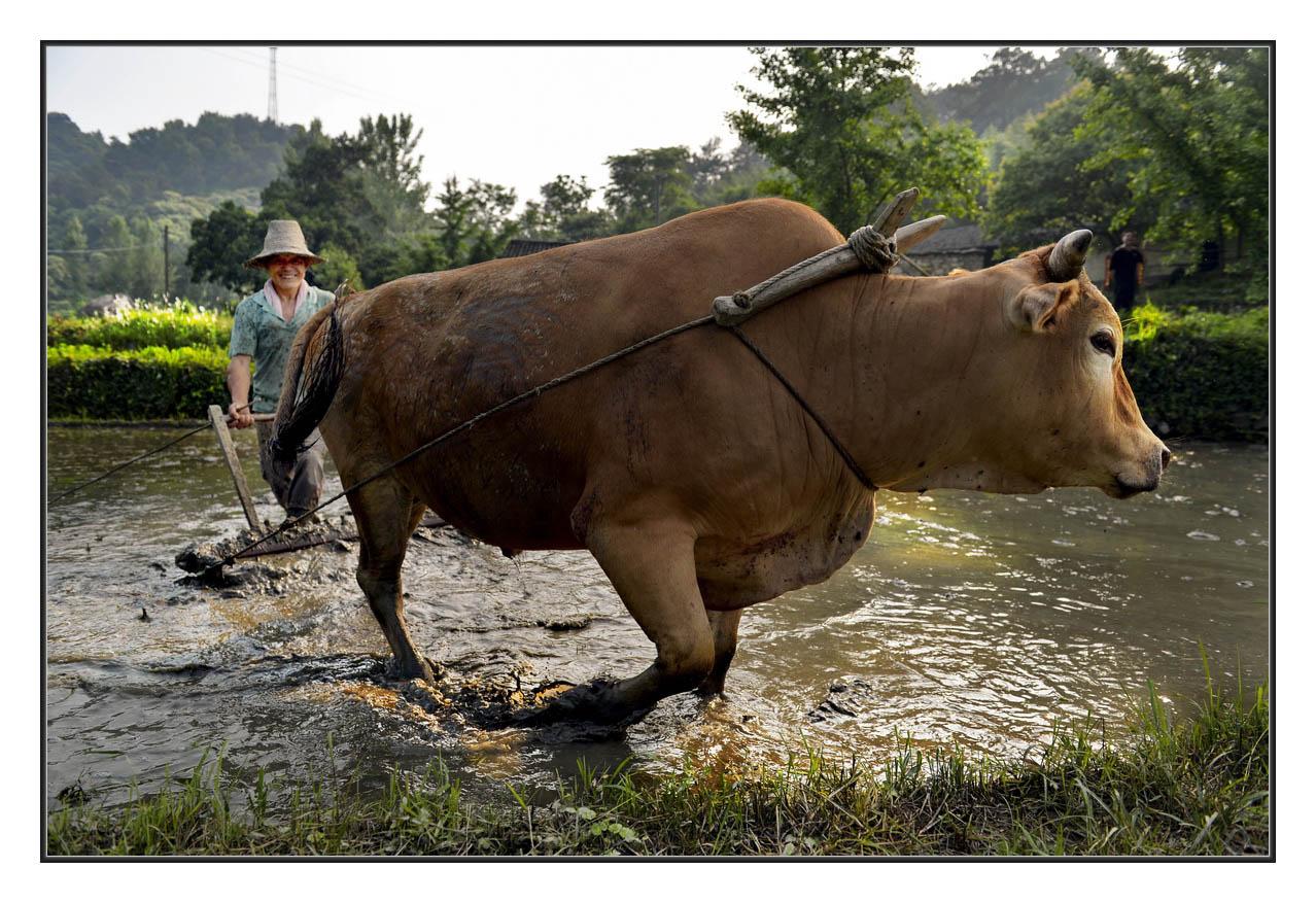 壁纸 大象 动物 牛 1278