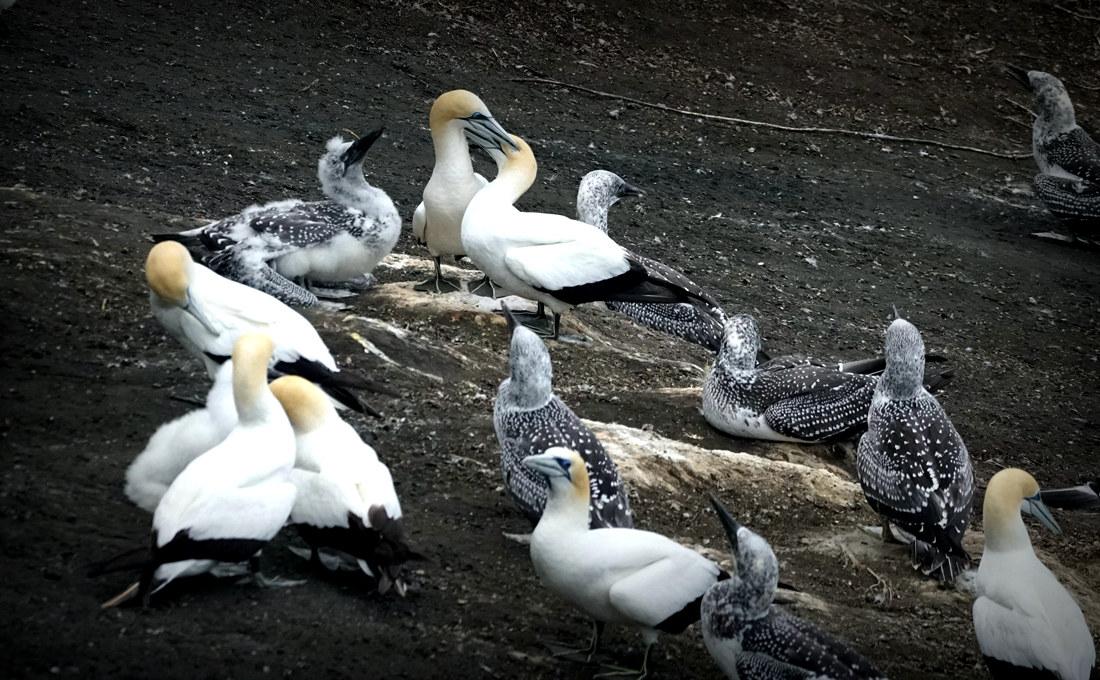 壁纸 动物 鸟 鸟类 摄影 1100_680