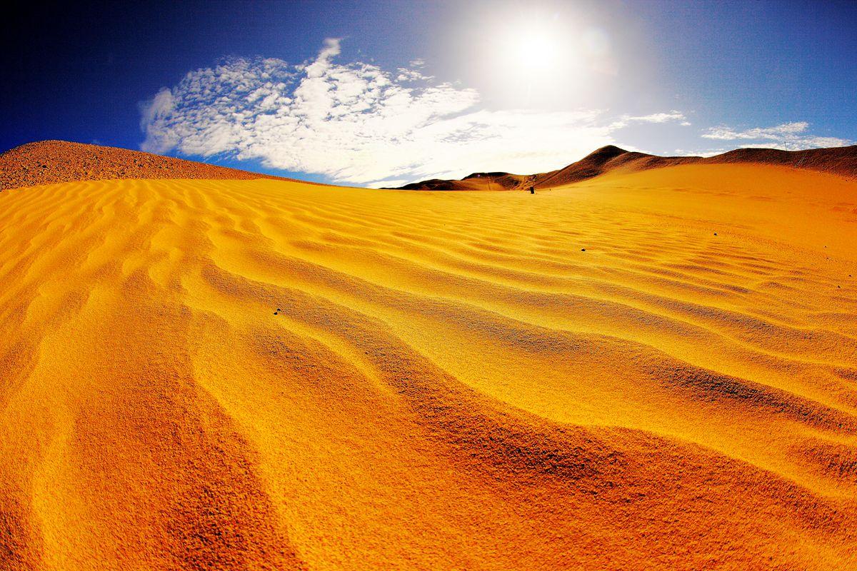 壁纸 成片种植 风景 沙漠 植物 种植基地 桌面 1200_800