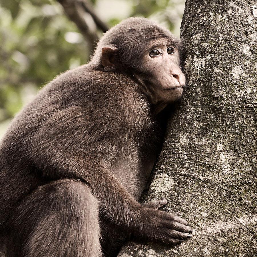 √自然保护区野生动物