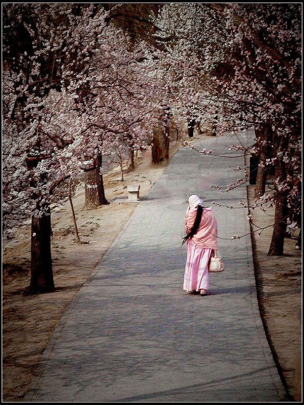 《春天的背影》