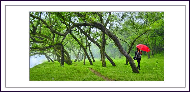 春天的小树林